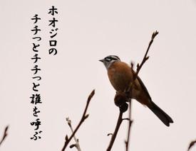 Hoojiro
